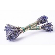 Juniper and Lavendel